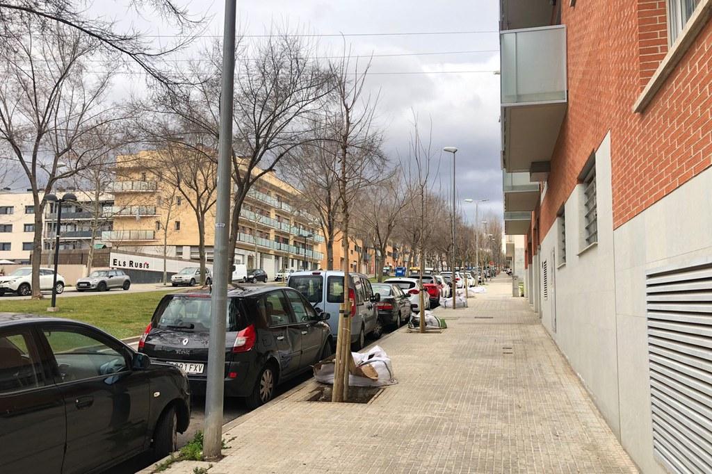 Ampliació del verd urbà, 62 nous arbres