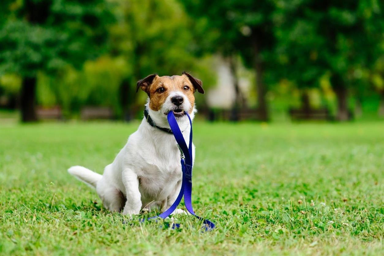 L'Ajuntament obre a consulta prèvia el reglament del servei de recollida i manteniment d'animals de companyia