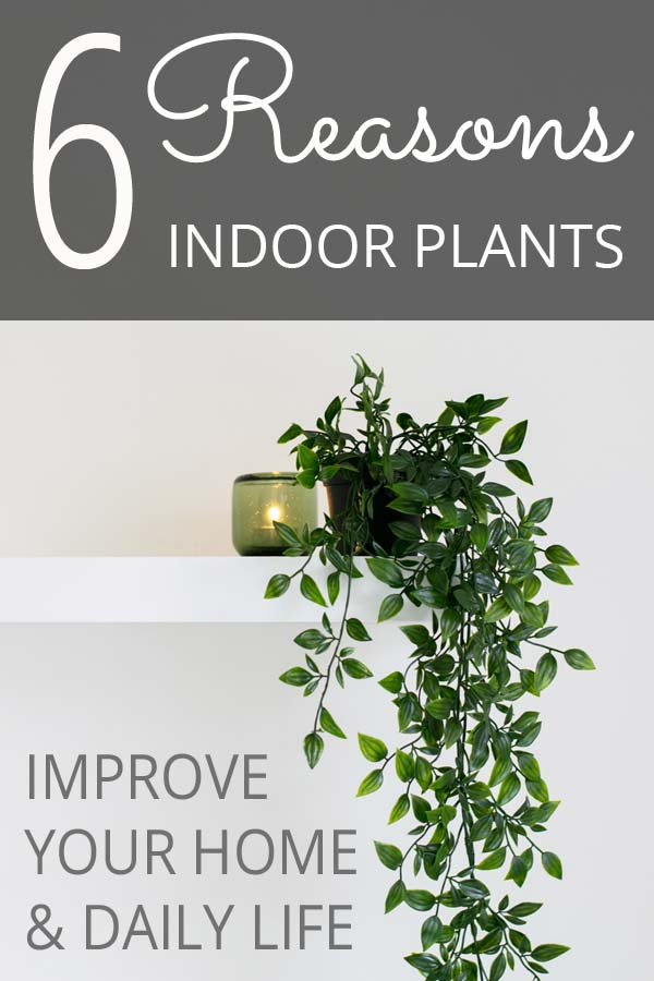 6 Reasons Indoor Plants Improve Your Home & Daily Life