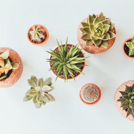 6 Benefits to Keeping House Plants