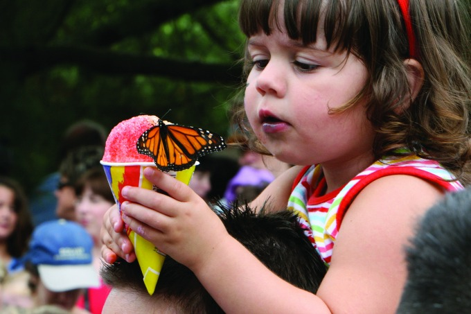 Roswell's Flying Colors Butterfly Festival returns June 3-4 to the Chattahoochee Nature Center. Photo: Chattahoochee Nature Center
