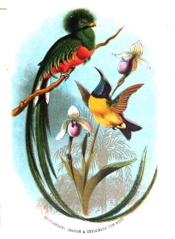 Trogon & Ceylonese Sun Bird
