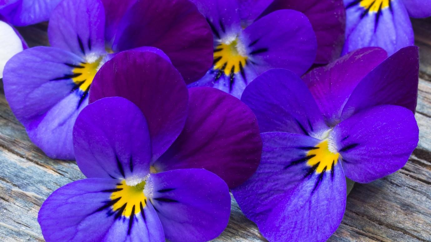 violet-2560-1440