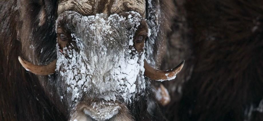 Wildlife Photography in Norway