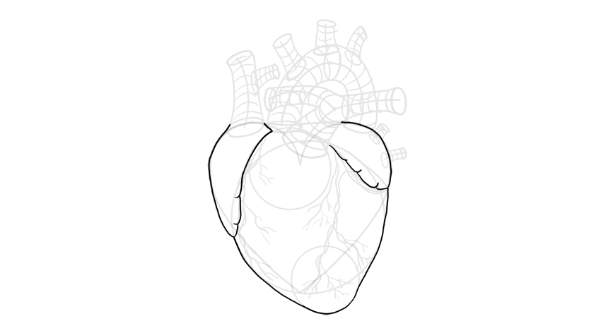 outline the shape of heart