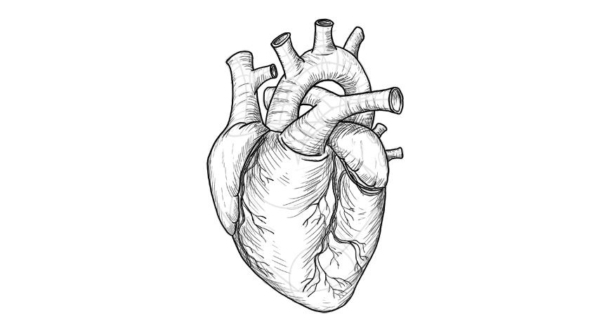 shade the heart