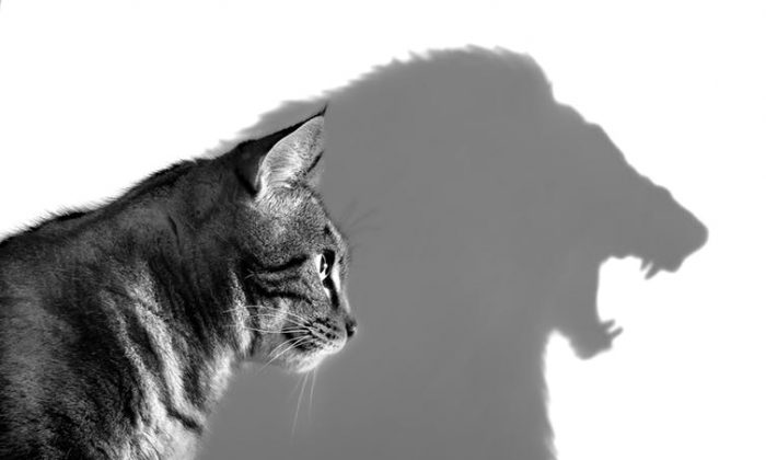 Cat to lion resilience