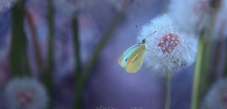 Flowers and Butterflies, photography by Monique Felber