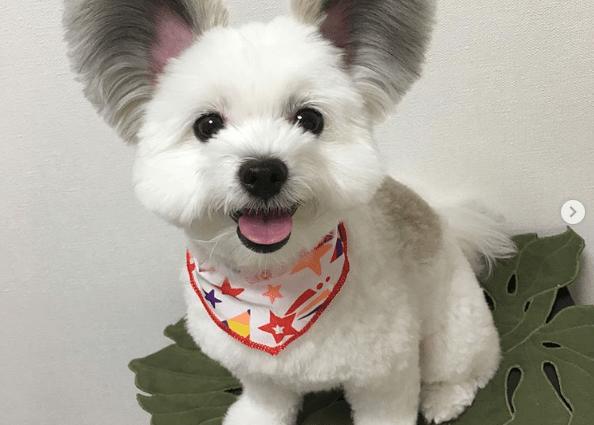 Cute mickey dog
