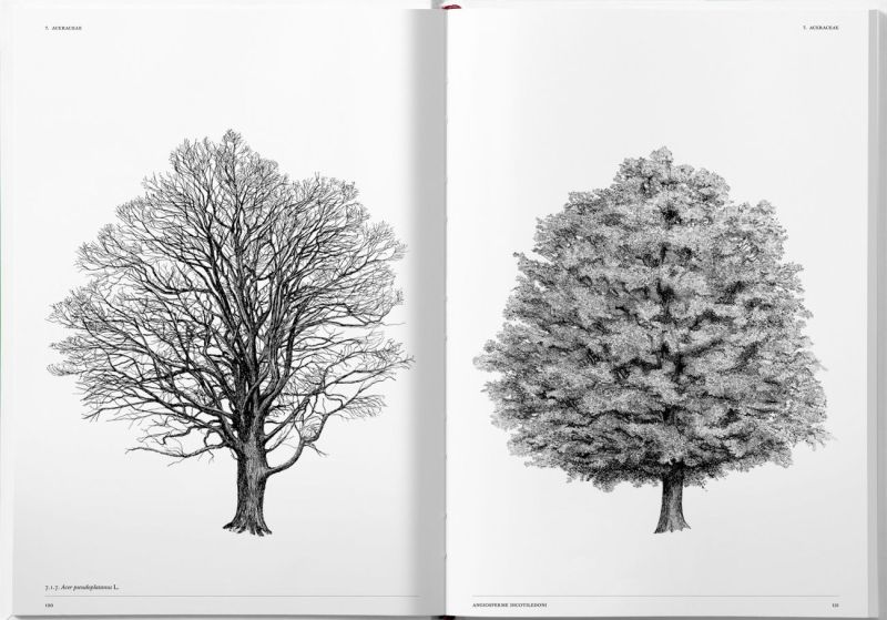 The Architecture of Trees by Cesare Leonardi and Franca Stagi
