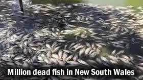 Fish Kill New South Wales