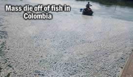 Dead Fish Colombia