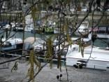 Port de l'Arsenal gardens 11