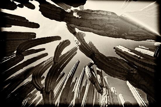 Antonio Turok_Órgano 2_Arte_Oaxaca_