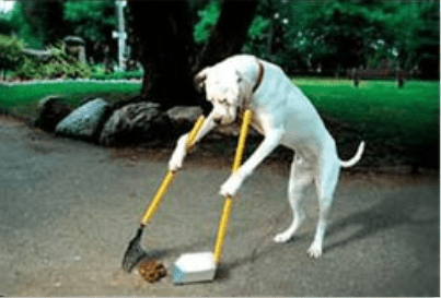 Dog fouling risk to achieving a cleaner neighbourhood – Enderby EYE