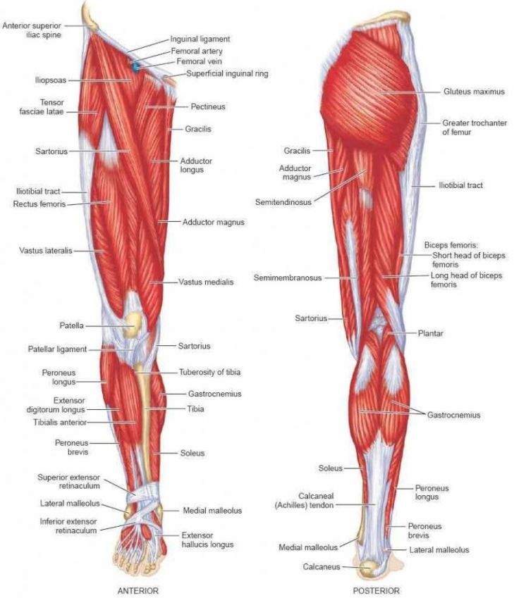 One Side and Both Side Leg Pain