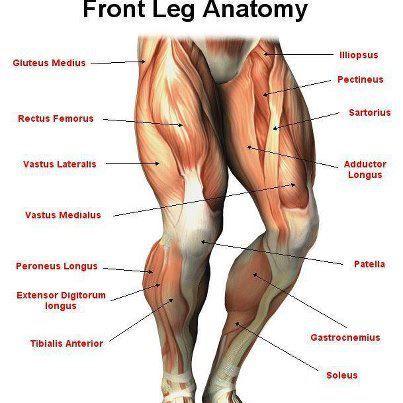 Inner Thigh Pain