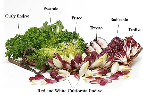 the different types of endive