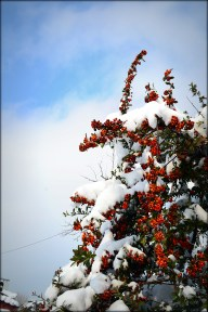 Snowberries & Sky