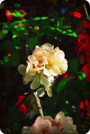 Recessive White Flower