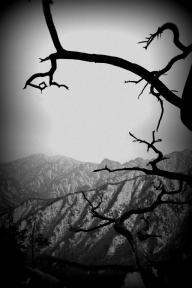 Gnarled Mountain Tree