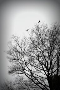 Storm Crow's Roost
