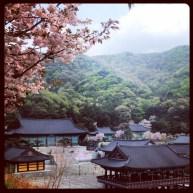 Cherry Blossom Temple