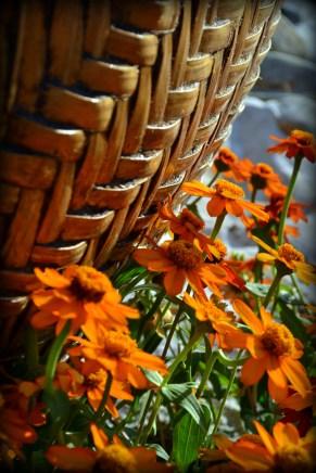 Woven Basket - Cademartori