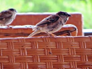 Birds visiting the outdoor cafe © Pennie McCracken - Endless Skys