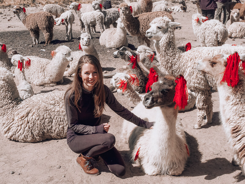 Girl petting Alpaca in Peru - something you cant miss!!!!
