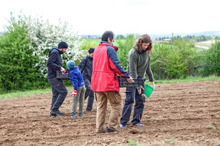 Solidarischer Gartenbau auf dem Lindenhof in Ober-Ramstadt