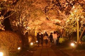 京都ぶらり旅