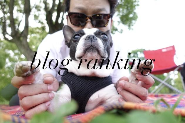 5月のブログランキングとbossのひとりごと