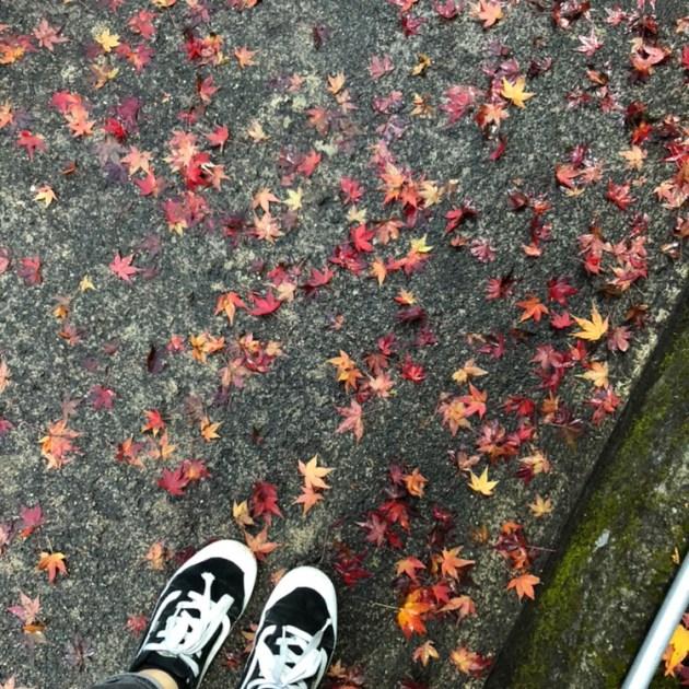 京都 貴船神社まで紅葉をみにいってきました!!