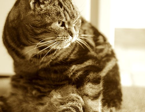 Cats Will Not Be Confusing To You Personally With These Tips