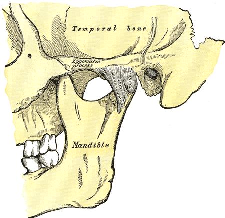 Temporomandibular Joint Tmj Pain Endorphins Health And