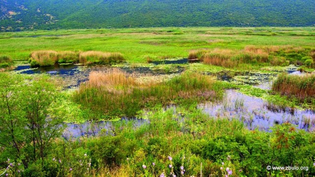 The thickets and reeds are nesting place for aquatic birds, mainy stopover when the seasons change.