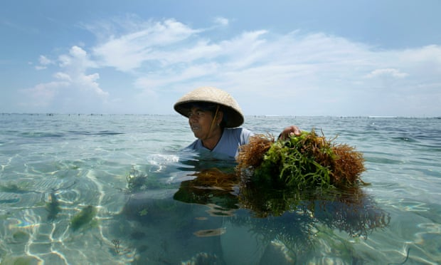 Young Indonesian creates sachets, fast food packaging, and more made from seaweed