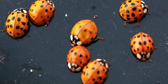 Massive ladybug swarm over California shows up on National Weather Service radar