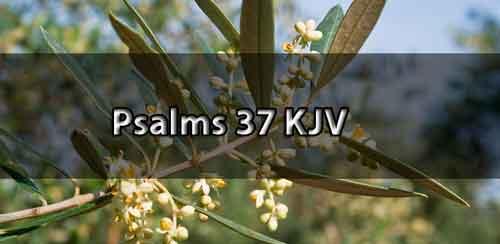 psalm 37 kjv