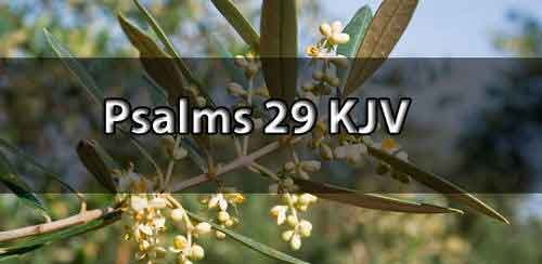 psalm-29