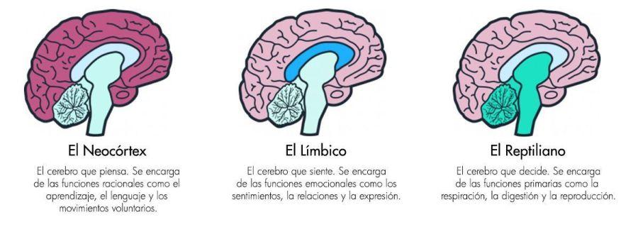 los tres cerebros