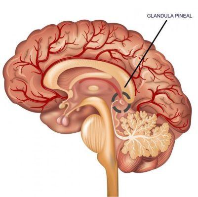 eneagrama cerebro