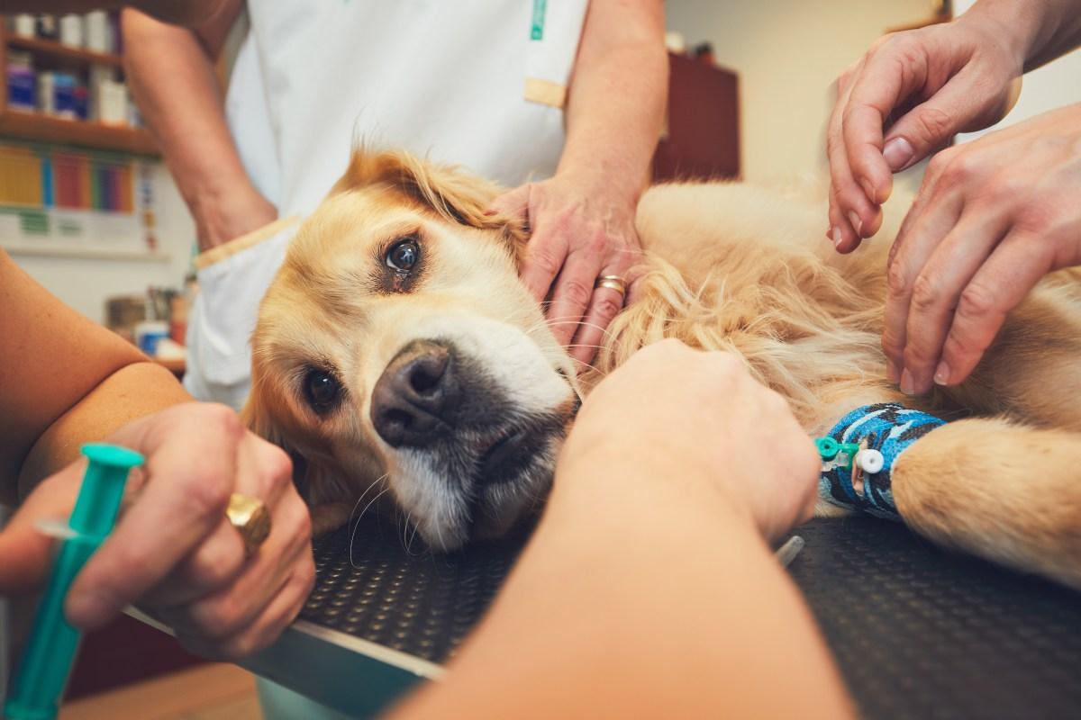 El IVA veterinario se mantiene al 21%