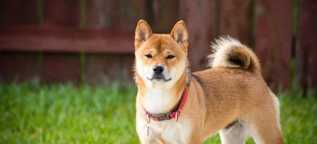 ¿Son los perros potencialmente peligrosos?
