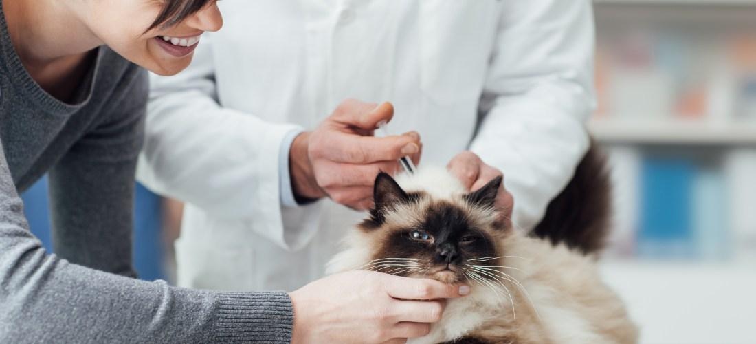 Visitar al veterinario podría salvar a tu mascota
