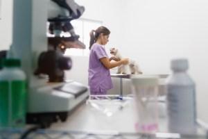 Sector veterinario ¿qué cambios se están produciendo?