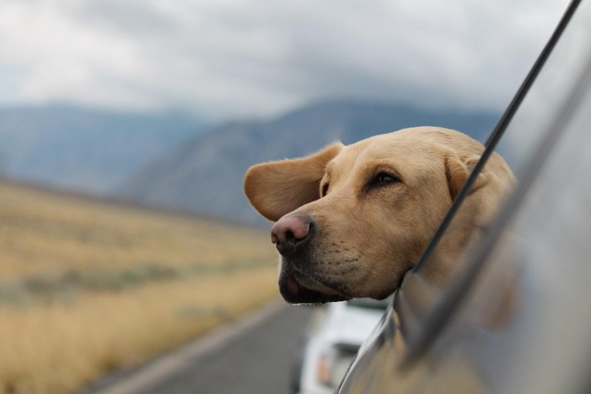 ¿Cómo llevar a tu mascota en el coche?