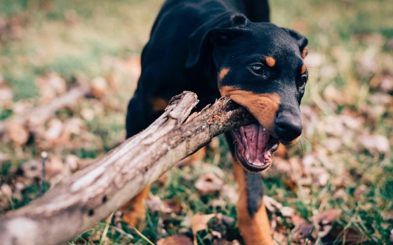 ¿Quién se responsabiliza cuando un perro muerde o ataca a alguien?
