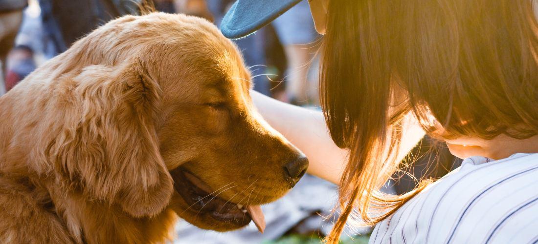 ¿Quieres tener una mascota? Todo lo que tienes que saber sobre la tenencia responsable